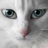 Кошка Понарошку