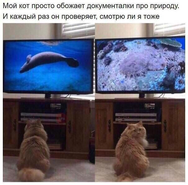 животны16.jpg
