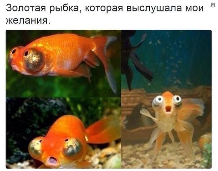 f_116880.jpg