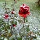 Падал снег