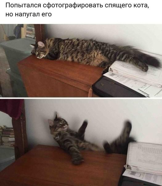 кошка112.jpg