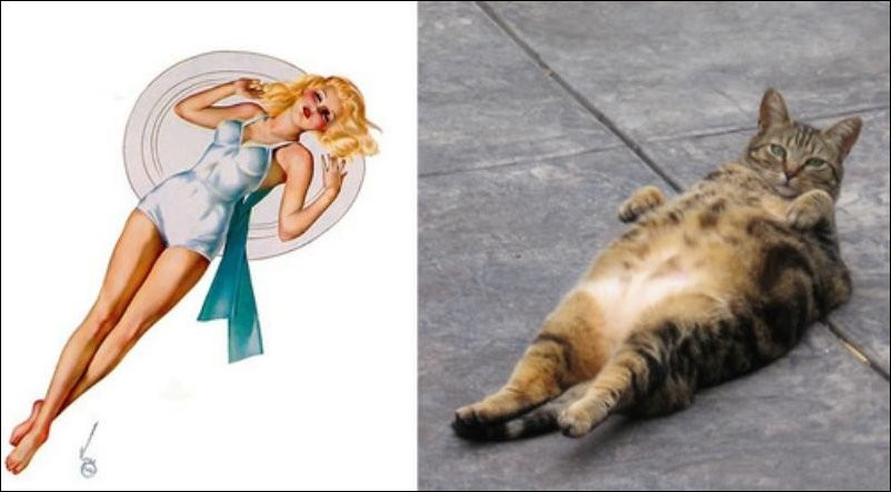 cats-pinup-girls-013.jpg
