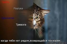 images (2).jpeg