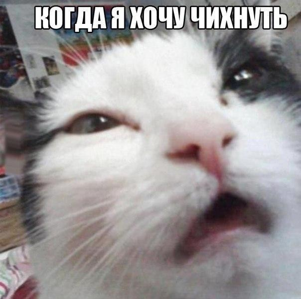 1419786474__miyvxko7ue.jpg