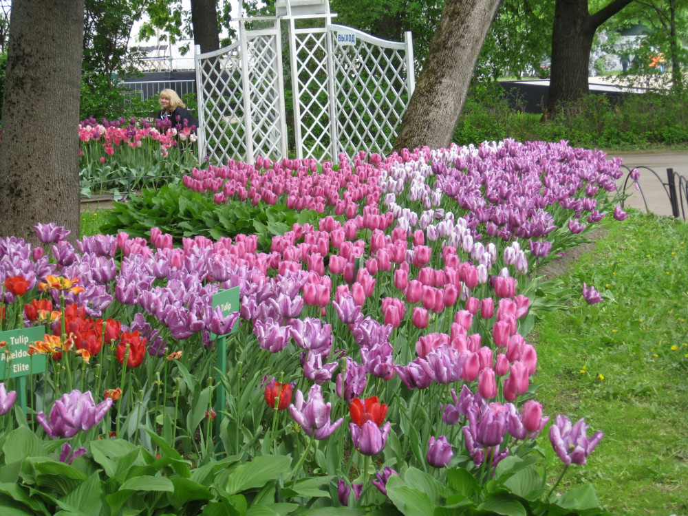 Тюльпаны_19_054.jpg