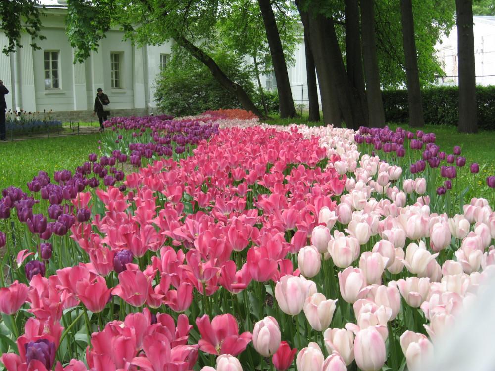Тюльпаны_19_065.jpg