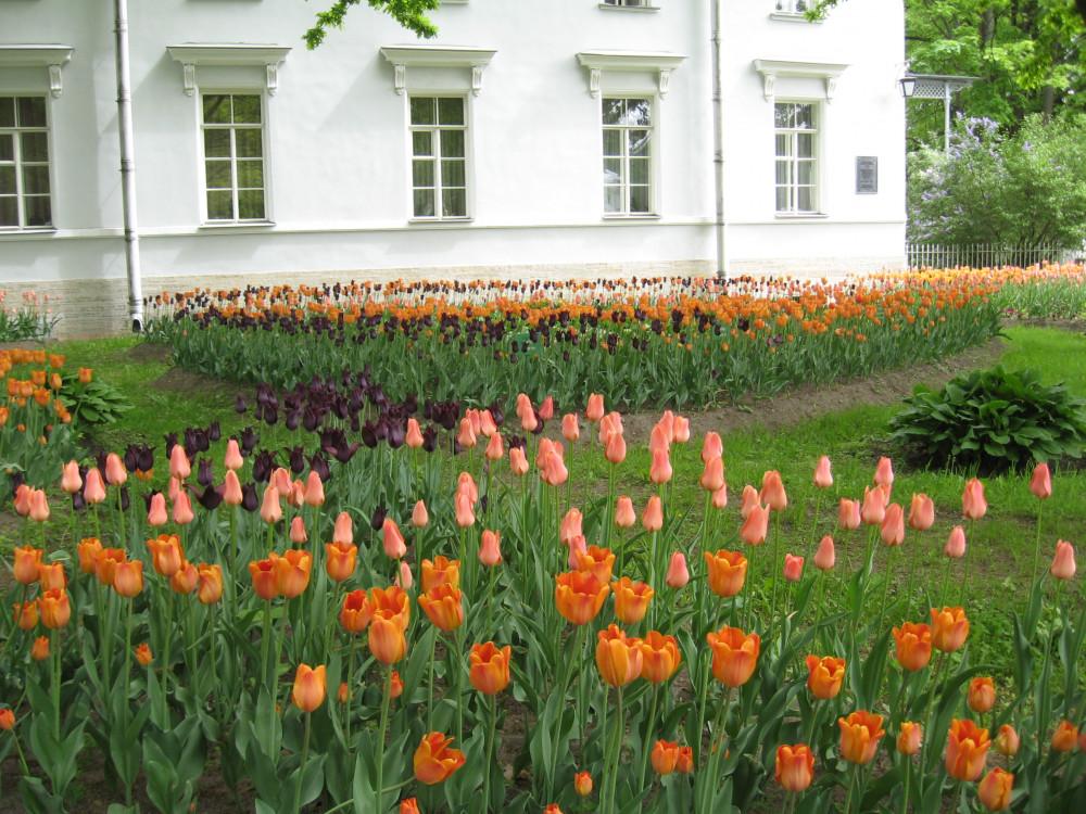 Тюльпаны_19_087.jpg
