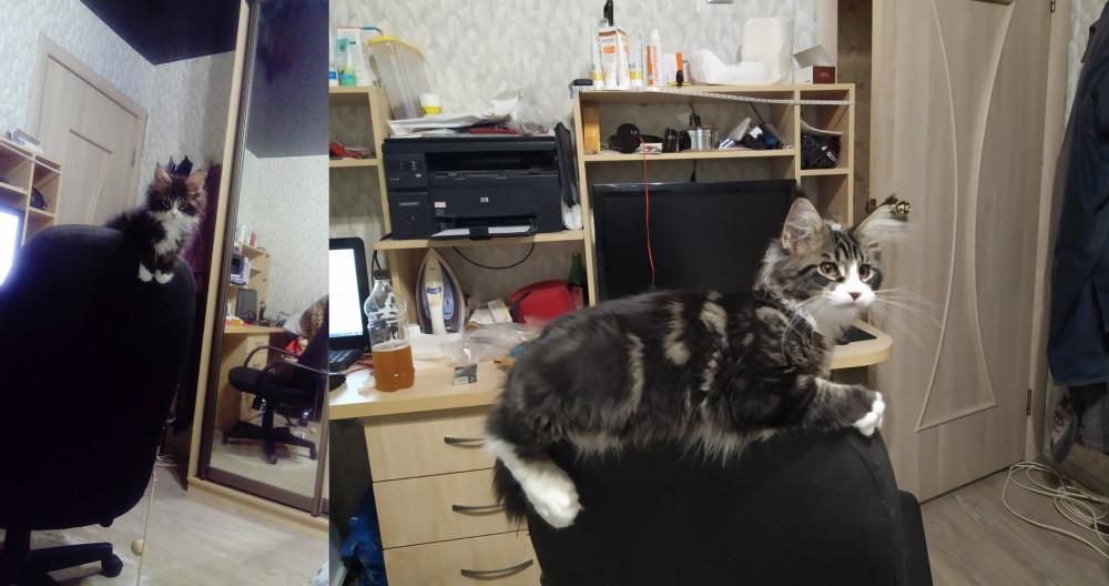Коть растёт.jpg