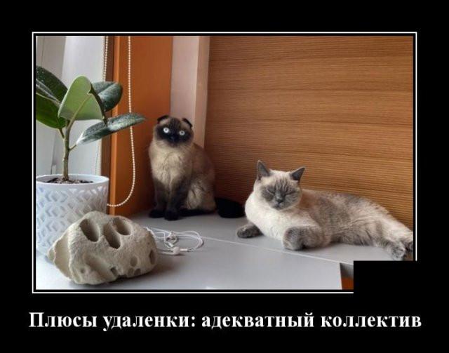 1592251219_0010.jpg