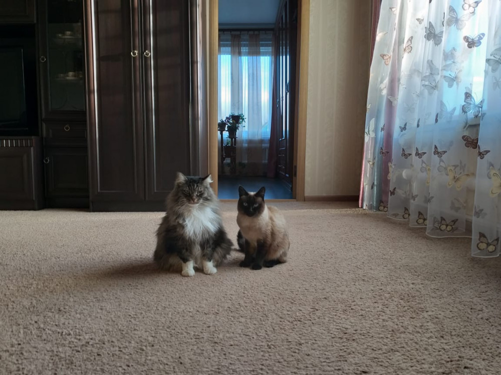 Мои кошки.jpeg