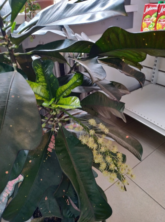 Screenshot_2020-06-02-22-47-26-605_com.miui.gallery.png