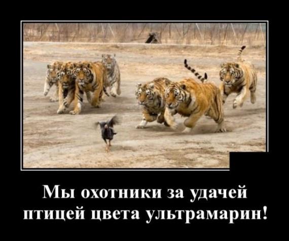 1589310910_1589285429_demotivatory_20.jpg