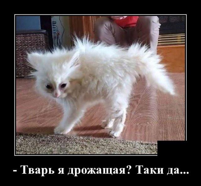 1594144084_0011.jpg