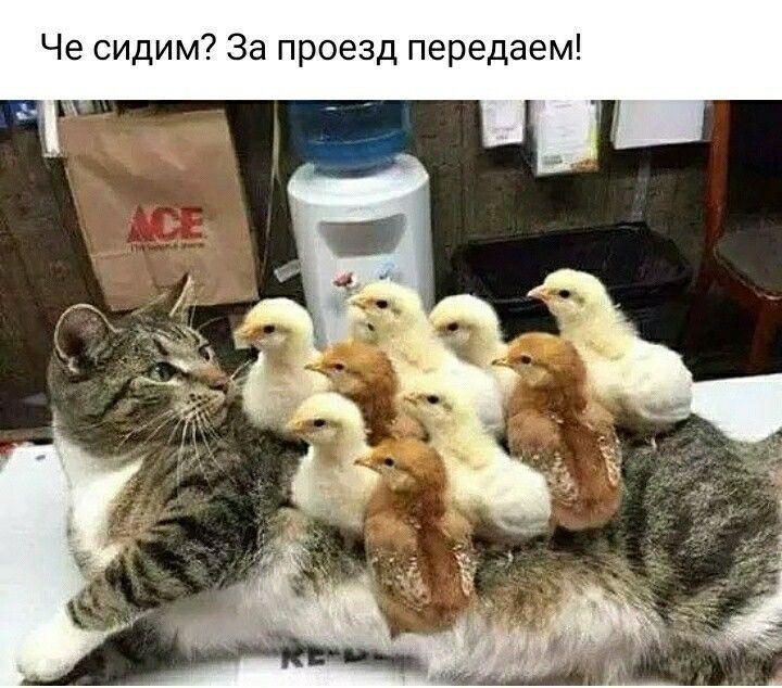 CvAZQxyqkDw.jpg